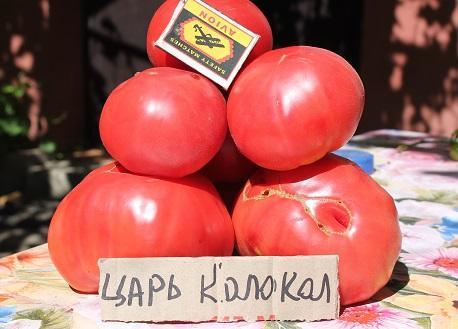 выращивание сортовых помидор