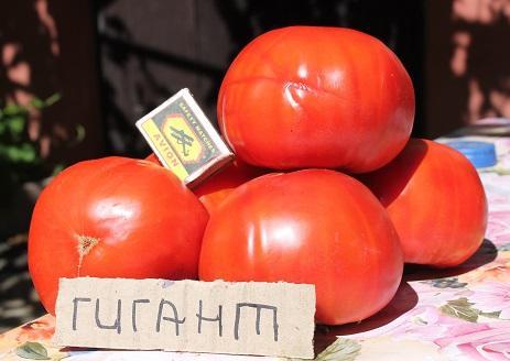 выращивание сортовых томатов