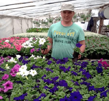 Выращивание петунии из семян. (1)