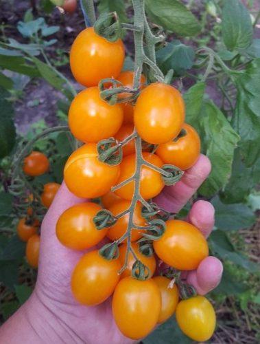 Как вырастить действительно ВКУСНЫЕ помидоры?