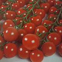 Нужно ли опылять томаты?
