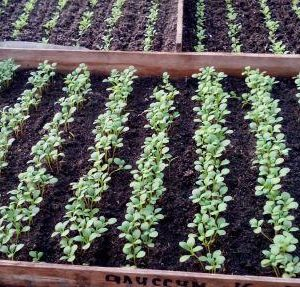 посевной календарь для цветов и овощей