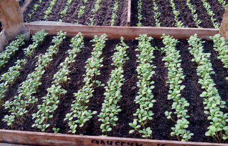 Посевной календарь для цветов и овощей.