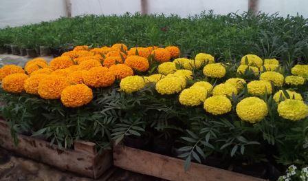 посевной календарь для овощей и цветов
