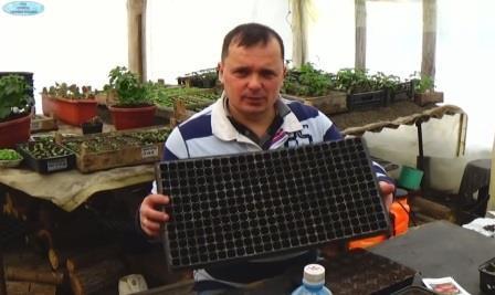 Как вырастить рассаду помидор в кассетах