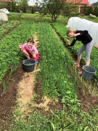 Сад огород своими руками