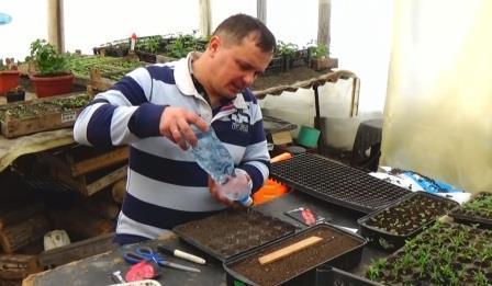 как вырастить рассаду томатов в кассетах