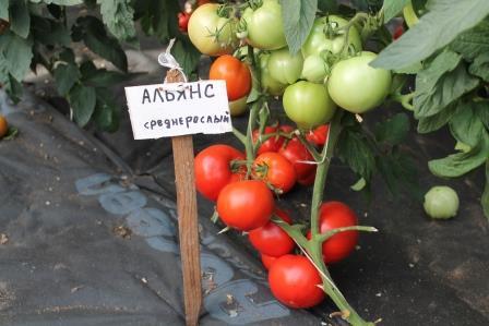 что выгоднее выращивать в теплице