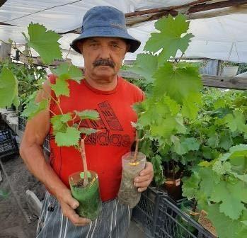 Саженцы винограда - моя коллекция!