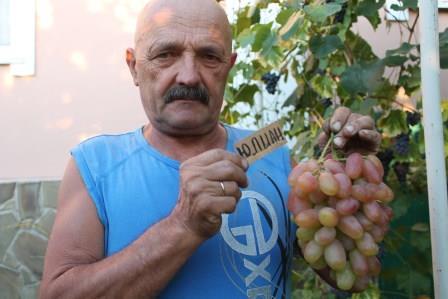 Выращивание винограда. Моя коллекция сортов.