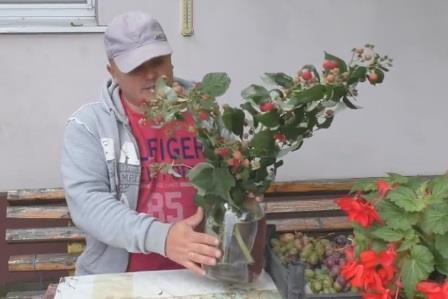 дозаривание малины осенью